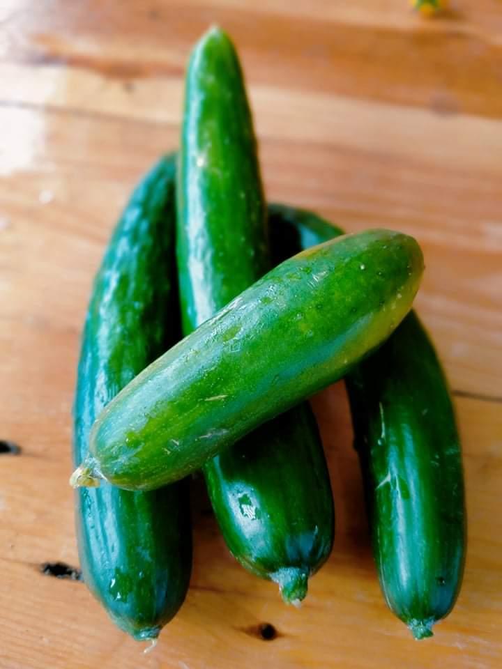 Japanese Cucumber, 300g